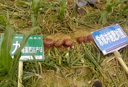雷力海肥施功效冲施肥在丰县莲子上冰棍喜人海藻洋葱图片